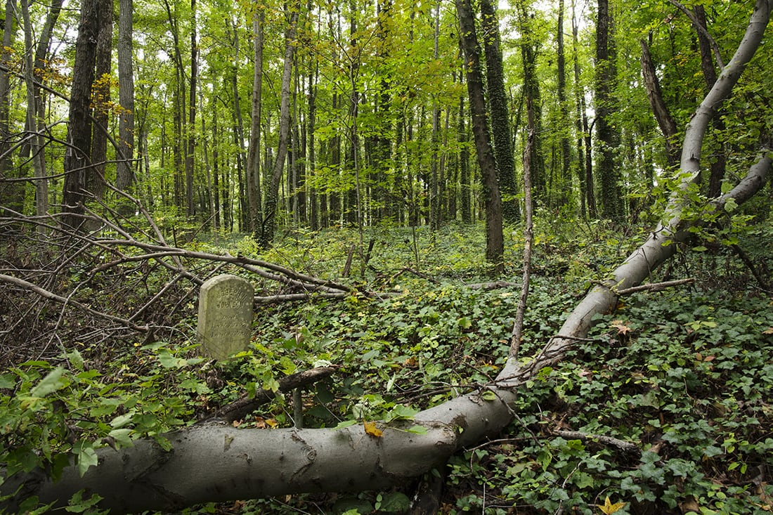 Fallen trees among markers.