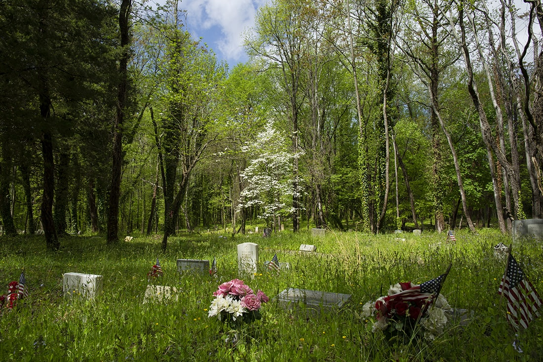 A cleard part of the cemetery. Artificial flowers and American flags on markers in the foreground, a dogwood tree blooming in the background.