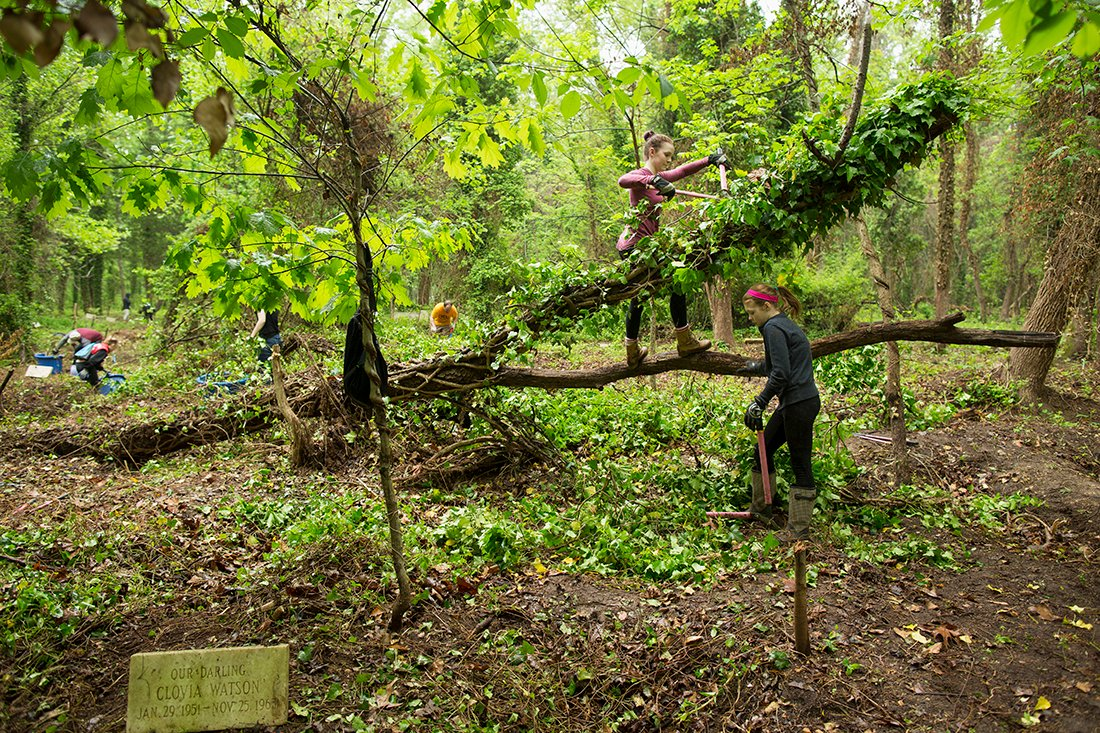 Two young women trimming ivy in foreground near a large fallen tree.