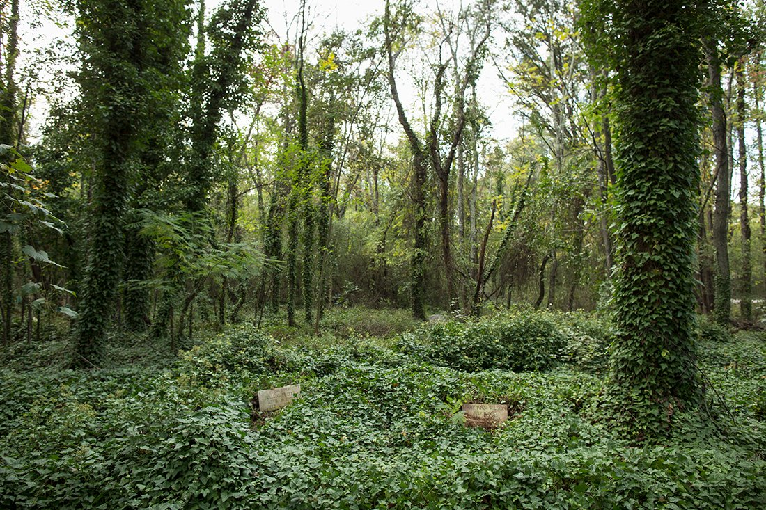 A large section of the cemetery covered by kudzu.