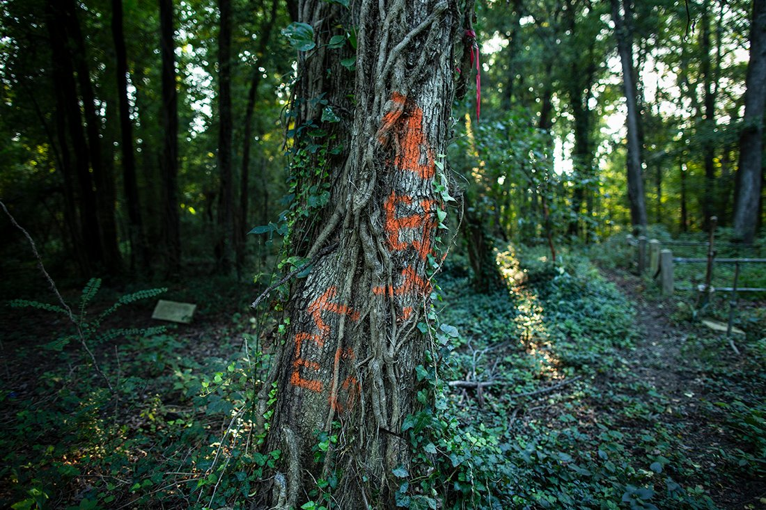 A tree with orange spray painted writing.