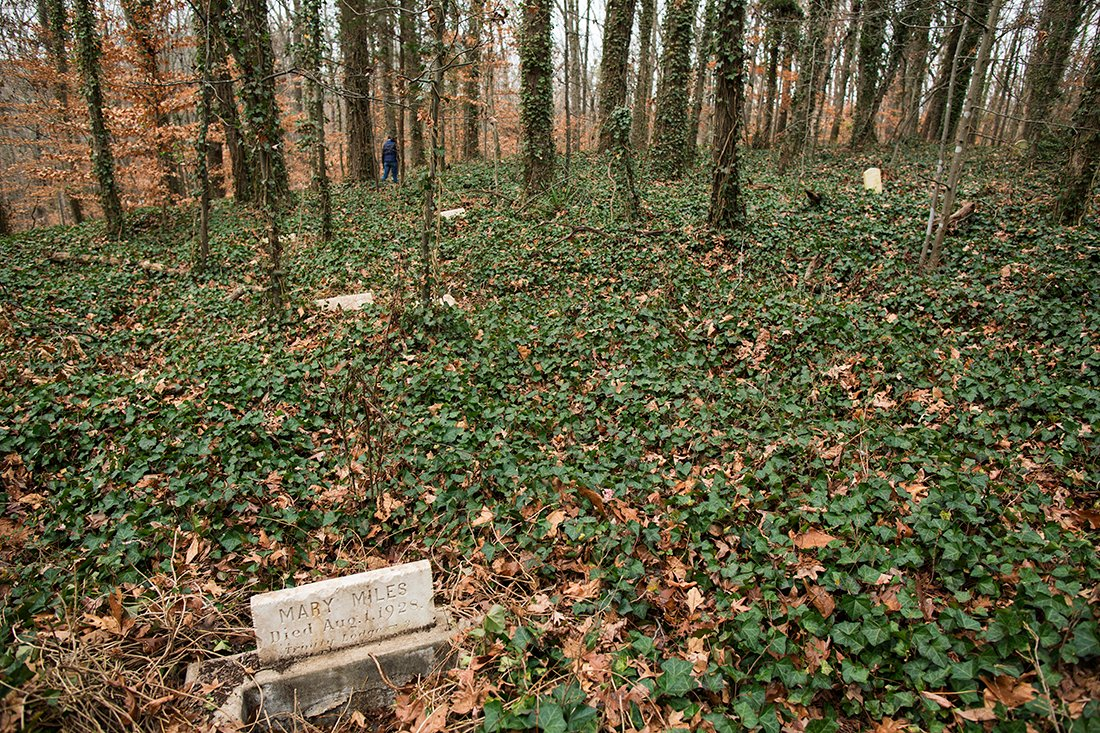 landscape view of markers in the fall amid ivy and brown leaves.